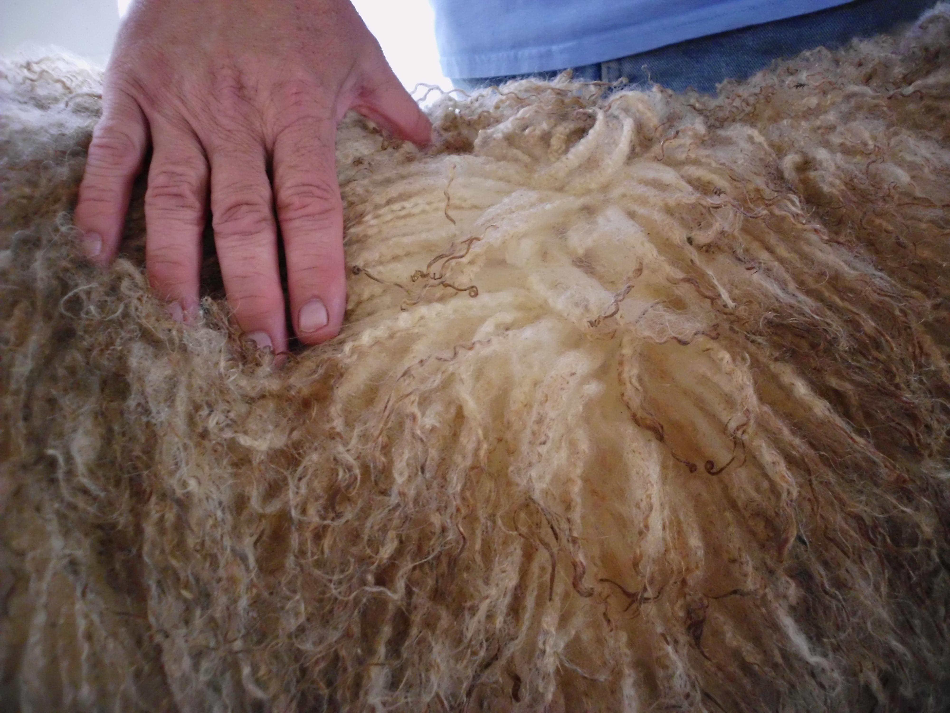 Murphy's fleece